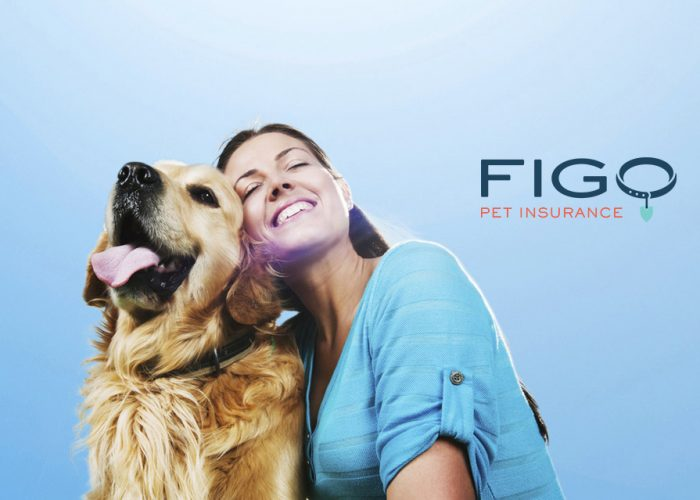 What Is Pet Health Insurance